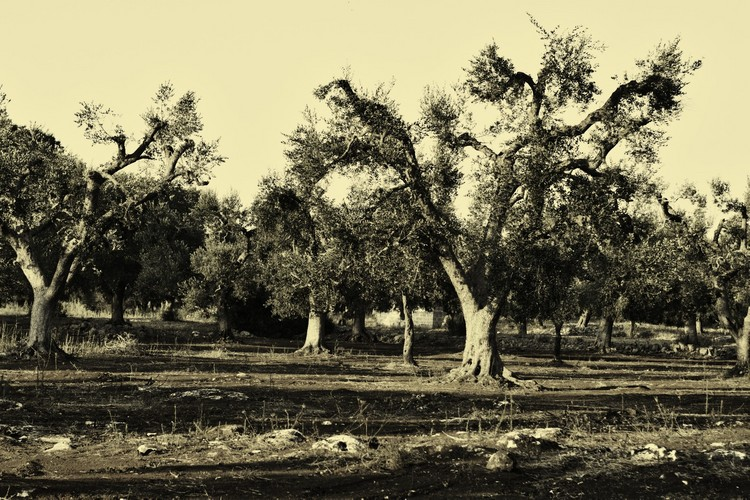 salento countryside